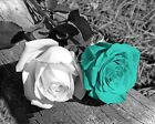 Black White Turquoise Rose Flower Wall Decor, Turquoise Home Wall Art Picture