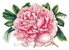 Gorgeous Pink Peony Quilt Fabric Block Multi Size FrEE ShiPPinG WoRld WiDE (F2
