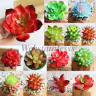 Home Garden - Lot Artificial Fake Real Touch Leaf Plant Succulents Landscape Garden Home Decor