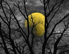 Black White Yellow Moon Modern Bedroom Wall Art Home Decor Matted Picture