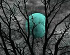 Black White Aqua Moon Treee Bedroom Wall Art Home Decor Matted Picture