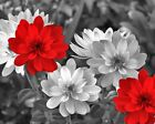 Black White Red Flowers Modern Bathroom Bedroom Wall Art Home Decor Picture