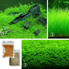 Внешний вид - 10g Bulk Plant Seeds Aquatic Live Water Grass Fish Tank Aquarium Ornament Supply