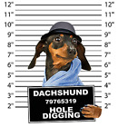 Dachshund Mug Shot Size Youth Small to 6 X Large T Shirt Pick Your Size image