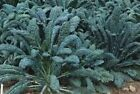 Heirloom Greens Seeds - Collards, Kale, Mustard, Spinach, Swiss Chard, or Turnip
