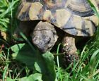 Russian Tortoise Forage Seed Mix - Also For Sulcata and Leopard - bin281