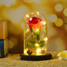 WR Eternal Rose Dipped in 24k Gold Glass Lamp Dome LED Light Gift Beauty & Beast