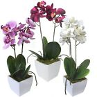 31cm Artificial Potted Orchid - Decorative Plant Gifts - Choose Colour From List