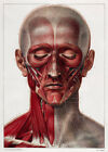 ML18 Vintage 1800's Medical Head & Neck Muscles Surgical Poster RePrint A2/A3/A4