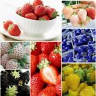 100pcs  Strawberry Seeds Nutritious Delicious Blue Black Fruits Vegetables Seeds