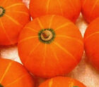 FD1350 1 Pack 8 Seeds Winter Squash Seed Pumpkin Seed Delicious Cucurbita g