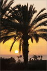 Poster / Leinwandbild Palm trees at sunset, Playa de Los Amadore... - M. Lange