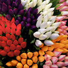 bundle of 18 individual stems of 5cm head tulips various colours