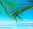 3D Palm sea sky blue 1A WallPaper Murals Wall Print Decal Wall Deco AJ WALLPAPER