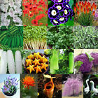 5pcs-20000pcs Home Garden Varity Rare Giant Seeds Vegetable Plant Flower Seed
