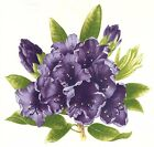 Rhododenron Flower Purple or Maroon Select-A-Size Waterslide Ceramic Decals Dx