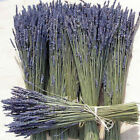 Bunch of Natural Lavender Dried Flower Bouquet 100 Stems Fragrant Home Wedding