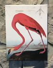 "Audubon ""PINK FLAMING"" Bird Wood Stretched Full Color Art Canvas Print Brand New"