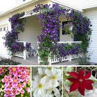 100Pcs/bag Healthy Flowers Climbing Plants Seeds Clematis Garden Planting