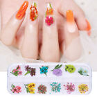 3D Nail Art Dried Flowers Leaves Decoration Lovely Colorful Floral  DIY