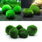 Внешний вид - Marimo Moss Ball Cladophora Live Aquarium Plant Fish Tank Aquarium Ornament US