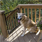 "Stairway Special Pet Gate Safety Fence 29.5"" High 27"" to 42.5"" W Adjustable"