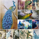 Peacock Oil Painting Canvas Prints Art Wall Picture Unframed Modern Home Decor