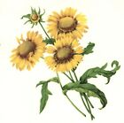 Gailliarda Sunflower Flower Floral Select-A-Size Waterslide Ceramic Decals Bx  image