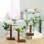 Plant Glass Vase Terrarium Cutting Propagation Vase Stand Home Decor hydroponic