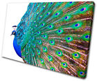 Animals Peacock Feathers SINGLE CANVAS WALL ART Picture Print VA