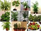 Indoor House Plant Collection - Established - Office - Home - Conservatory