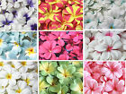 "Plumeria/Frangipani 3.1""(8cm)Head Artificial Silk Flower Heads Wedding decor"