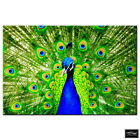 Animals Peacock Feathers   BOX FRAMED CANVAS ART Picture HDR 280gsm