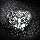 Cool Stainless Steel Men's Punk Gothic Wolf Snake Bald eagle Rings Jewelry 8-13