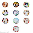 Wholesale Glass Dome Cabochons Pet Pattern Embellishment Round Mixed 20mm