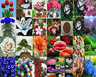 Various Flower Seeds Ideal Garden Potted Seed Rare Fruit Plant Home Garden Seed