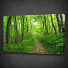 ROAD PATH IN THE GREEN FOREST BOX MOUNTED CANVAS PRINT WALL ART PICTURE PHOTO