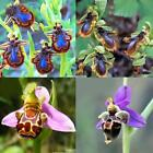 100PCS Rare Smile Face Bee Orchid Flower Seeds Garden Plant Seeds Decor EN24H