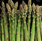 50+ - 1 lb. Non-GMO Mary Washington Asparagus Seed - Perennial Vegetable