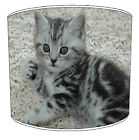Lampshade Ideal To Match British Short hair Cat Cushion cat Blankets & Pictures