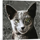 ARTCANVAS Russian Blue Cat Breed Charcoal Canvas Art Print