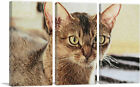 ARTCANVAS Abyssinian Cat Breed Closeup Canvas Art Print