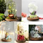 Clear Glass Cloche Bell Jar Display Dome with Wooden Base Tabletop Decoration