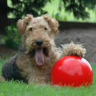 Boomer Red Ball Indestructible Solid Dog Toy Various Pet Toys Size Nice pup CL