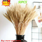 50/100pcs Natural Dried Wheat/reed  Bunch Flower Wedding Home Bouquet Decor