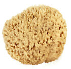 Natural Sea Wool Sponges by Spa Destinations (Choose Size)