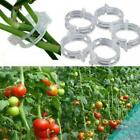 100pcs Tomato Veggie Garden Plant Support Clips For Trellis Twine Greenhouse New
